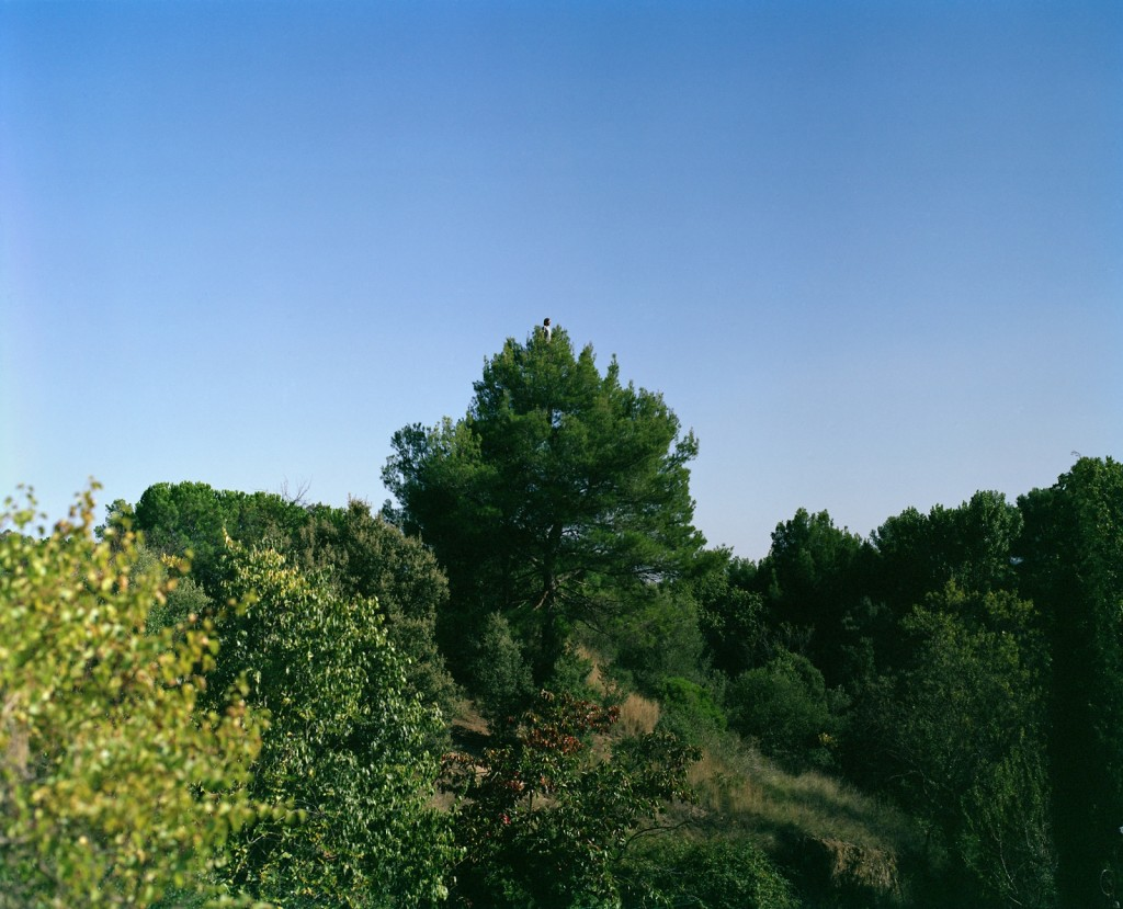 Climb the tree to be taller than the tree